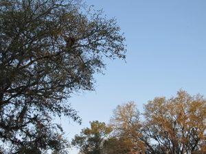 Treesmystreet