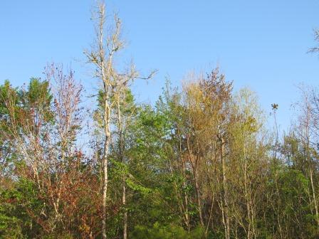 Treesparadisepond(4)