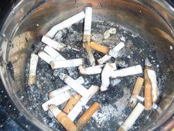 Treescigarettes