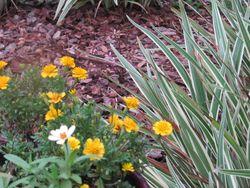 Gardenmarigoldszinniaswhatchamacallit