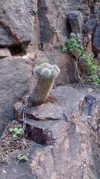Canyoncreekcactus