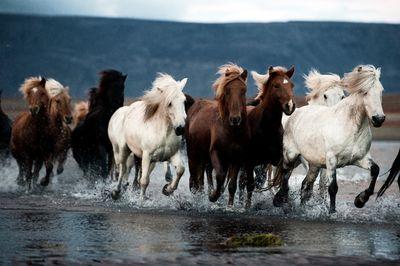 Herdmentalitypotd.pdnonline