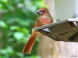 Waitingforbirdsfledglingterra4incognita.wordpress